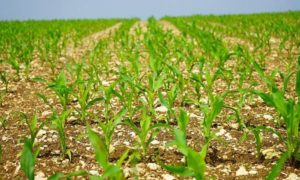 рынок аграрных биопродуктов США
