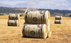 Чистая прибыль сельхозпредприятий снизилась на 13,9%