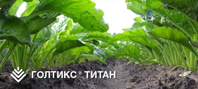 ГОЛТИКС ТИТАН, КС