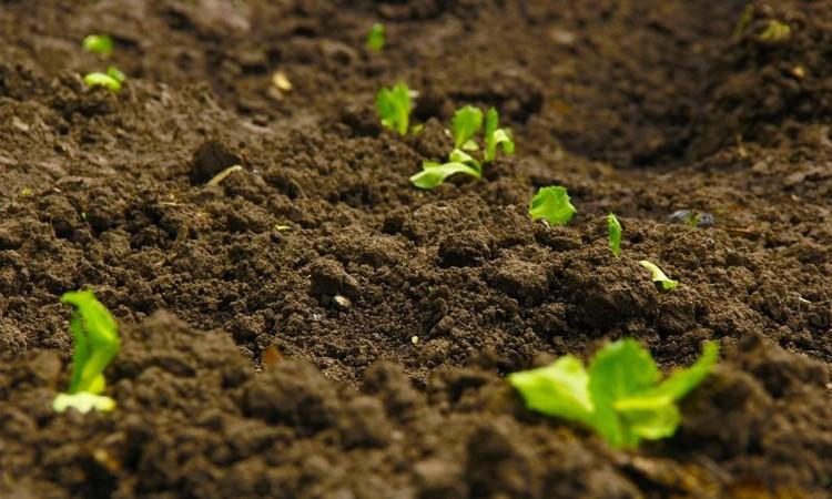 Как рН почвы влияет на гербициды