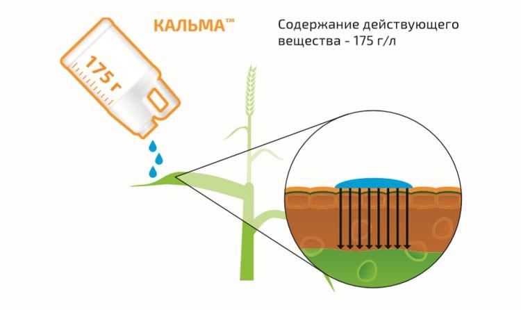 Кальма - механизм действия