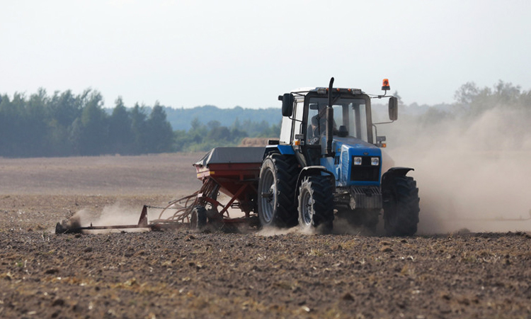 Озимые зерновые в Беларуси посеяли на 63% запланированных площадей