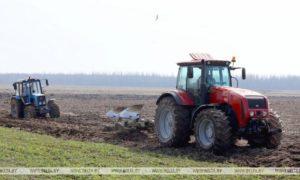 Ранние яровые в Беларуси