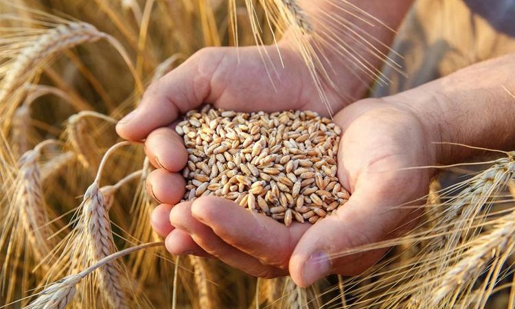 Запрет на экспорт зерна из Беларуси 2021