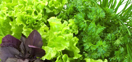 Семена зелёных культур