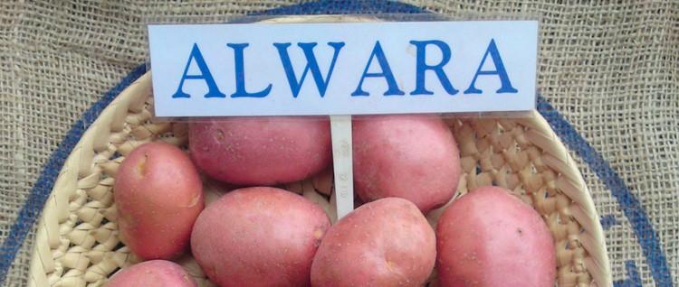 Альвара