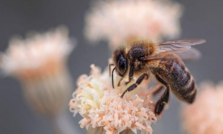 Биопестицидная альтернатива для уничтожения вредителей без вреда для пчел