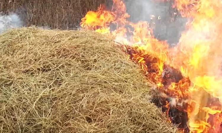 Более 50 тонн соломы сгорело в Бешенковичском районе