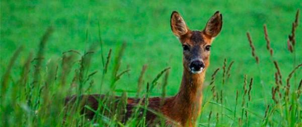Пастбищная смесь для диких животных