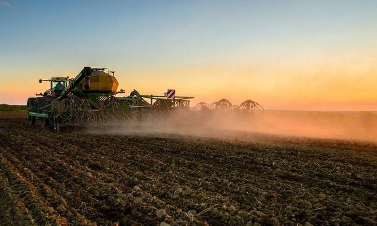 В Беларуси посеяли более половины зерновых
