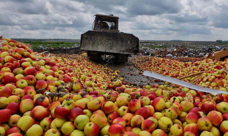 Уничтожение нелегально ввезенных фруктов
